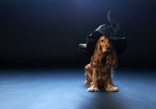 Dog sitting in a witches hat Royalty Free Stock Images