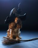 Dog sitting in a witches hat Royalty Free Stock Photo