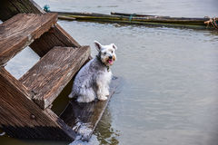 The dog sitting on Wooden stairs. At Waterfront home Stock Photography