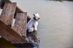 The dog sitting on Wooden stairs. The dog sitting on Wooden stairs at Waterfront home Stock Photos