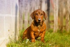 Dog sitting in yard Stock Photos