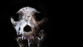 Dog skallen i skogen, läskig grungetapet Allhelgonaaftonbackgroun Arkivfoto