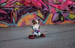 Dog on skateboard royalty free stock photo