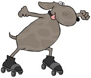 Dog On Skates Stock Images