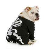 Dog skeleton Stock Photography