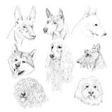 Dog sketch portraits. Royalty Free Stock Photos