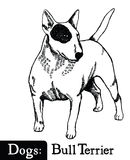 Dog Sketch style Bull Terrier Royalty Free Stock Photography