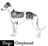 Dog Sketch style Greyhound Royalty Free Stock Photos