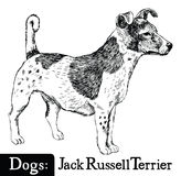 Dog Sketch style Jack Russell Terrier Stock Image