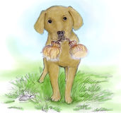 Dog sketch watercolour. Watercolour version of of a dog standing outdoor in Pencil Sketch Vector Illustration