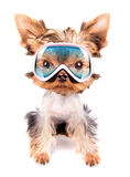 Dog with ski mask Royalty Free Stock Photo