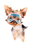Dog with ski mask Royalty Free Stock Photos