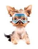 Dog with ski mask. Baby dog with ski mask on a white background Stock Image