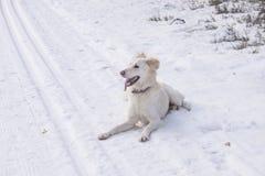 Dog on ski route Stock Image