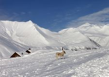 Dog on ski slope in nice day Royalty Free Stock Photo