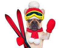 Dog ski winter Stock Photo