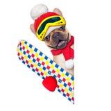 Dog ski winter Royalty Free Stock Photography