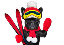 Dog ski winter Royalty Free Stock Photo