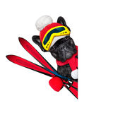 Dog ski winter Stock Photos