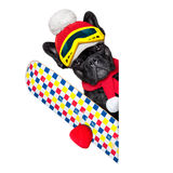 Dog ski winter Royalty Free Stock Photos