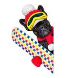 Dog ski winter Royalty Free Stock Photos