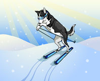 Dog skier. Vector drawing of the dog skier Royalty Free Stock Photos