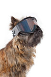 Dog with skiing mask portrait. Royalty Free Stock Photography