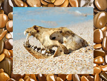 Dog skull on the beach Royalty Free Stock Image