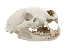 Dog skull cutout Stock Images