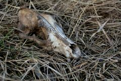 Dog skull on the grass royalty free stock photos