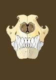 Dog skull front. Skull of dog section with bones x ray Stock Images
