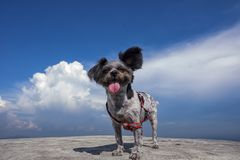 The Dog in the sky. In Shao-Guan-City,GuangDong of China.it is the highnest all of the GuangDong Province royalty free stock photography