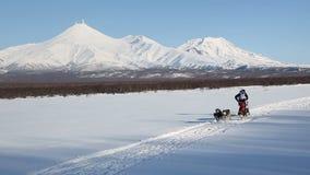 Dog släden som springer på bakgrund av Kamchatka volcanoes