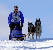 Dog sled Royalty Free Stock Photography