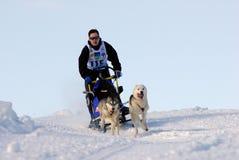 Dog sled Royalty Free Stock Image