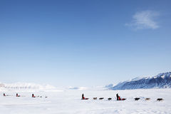 Dog Sled. A number of dogsleds on a barren winter landscape Royalty Free Stock Photo