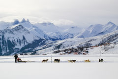 Dog sled in the alps. Winter scene with dog sled Stock Photo