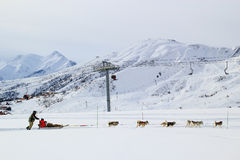 Dog sled in the alps Stock Images