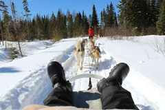Dog sled. In Canada Royalty Free Stock Photography