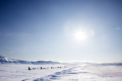 Dog Sled Expedition. A number of dogsleds on a barren winter landscape stock photo