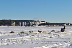 Dog sled on the ice in Luleå Stock Photo