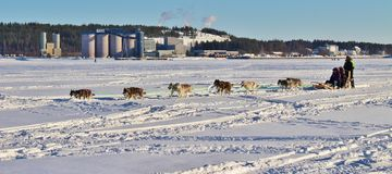 Dog sled on the ice in Luleå Royalty Free Stock Photos