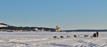Dog sled on the ice in Luleå Stock Photos