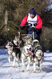 Dog sled race Stock Photography