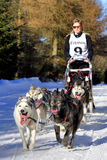 Dog sled race Stock Image