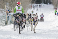 Dog sled race todtmoos Royalty Free Stock Photography