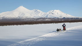 Dog sled racing on background of Kamchatka volcanoes. PETROPAVLOVSK-KAMCHATSKY, KAMCHATKA PENINSULA, RUSSIA - DEC 10, 2016: Sled dog racing dog sled racing