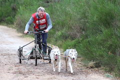 Dog sled racing Royalty Free Stock Images