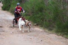 Dog sled racing Royalty Free Stock Image