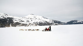 Dog sled ride on toboggan at Alaska glacier Royalty Free Stock Photography